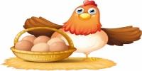 البيض والدجاج قد ينقلان إنفلونزا الطيور وهذه الطريقة الصحيحة لطهيهما